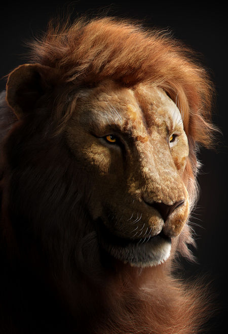 Aneeshchandra lion renders aneesh  cfd6bc6d 8woc