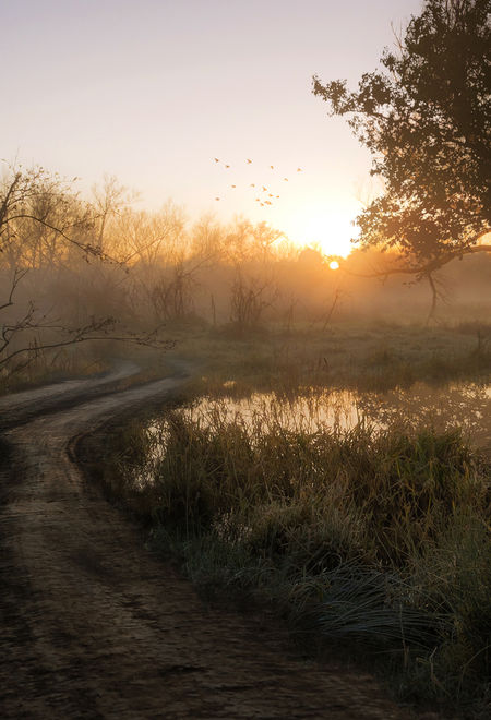 Conarcross fh4 marshland season 99257014 0jgb