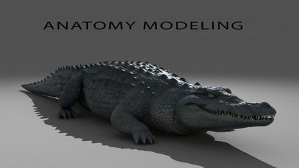 anatomy-modeling