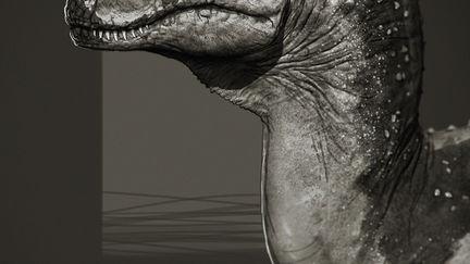 Ceratosaurus Study
