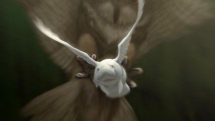 White Winged Manatee