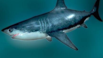 Shark 3dsmax9