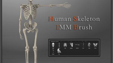 Skeleton IMM