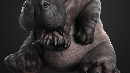 Hipopotamus Phantom