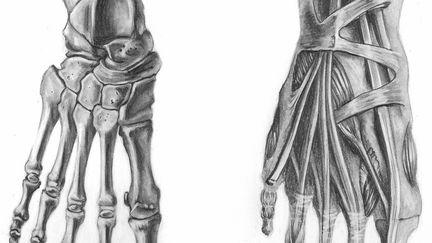 Anatomy of foot