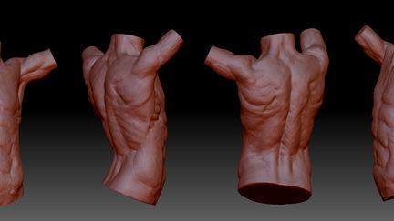 torso sculpting