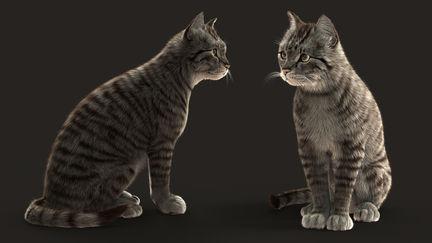 Tabby cats study