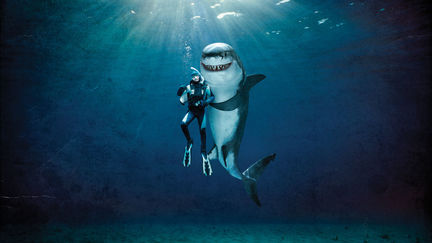 Juicy Fruit Shark