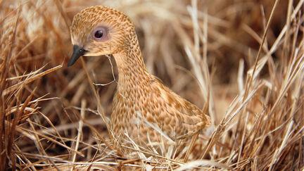 Bird(Feather)