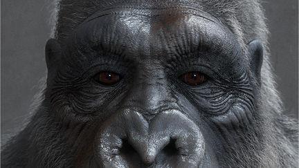 Gorilla by TITI 02 (WIP)