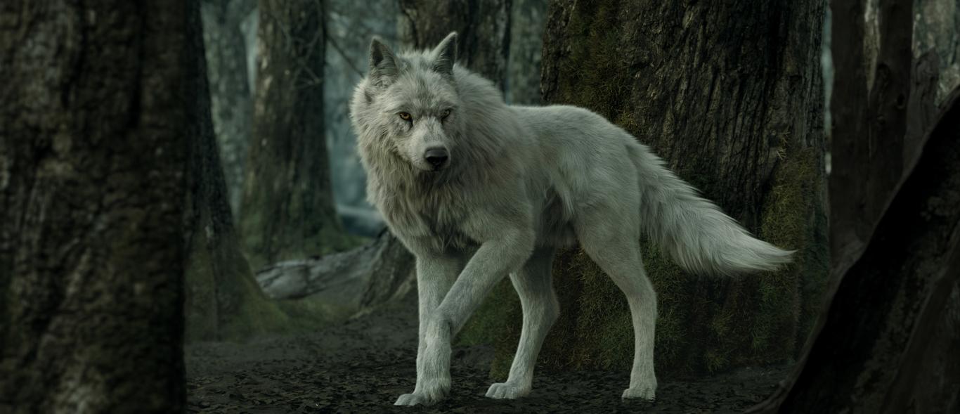 Alireza akhbari wolf 1 1986a34c 2j6v