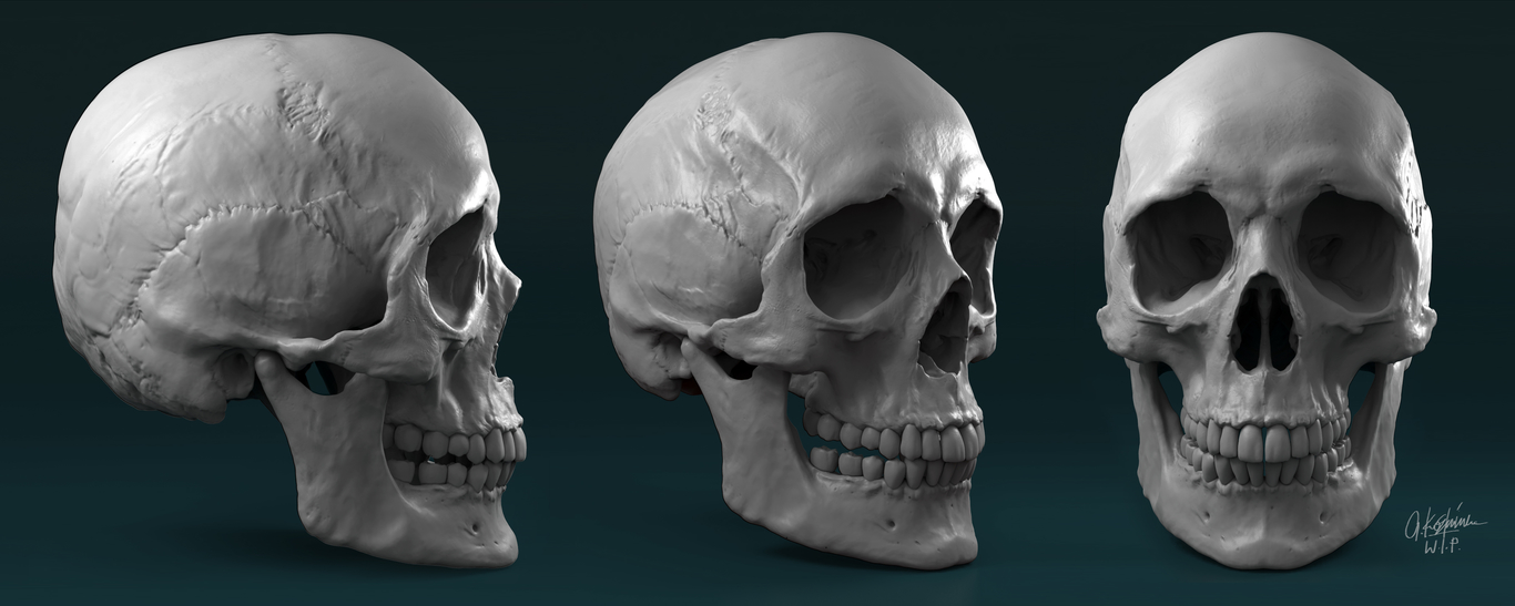 Grzegorzkorniluk female skull sculptu 1 94973cbb zvqw