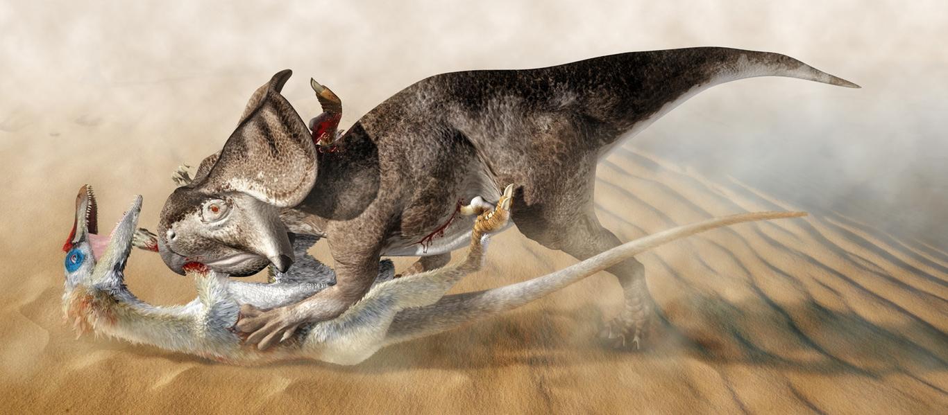 velociraptor vs protoceratops by japa2
