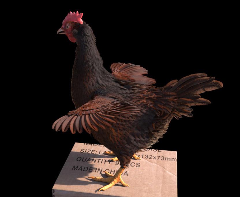 Lazzhar hen chicken 3d feath 1 4659ad93 py7w