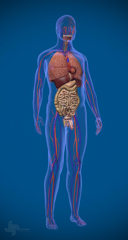 Maromero 3d human anatomy mal 1 e4282647 9gin
