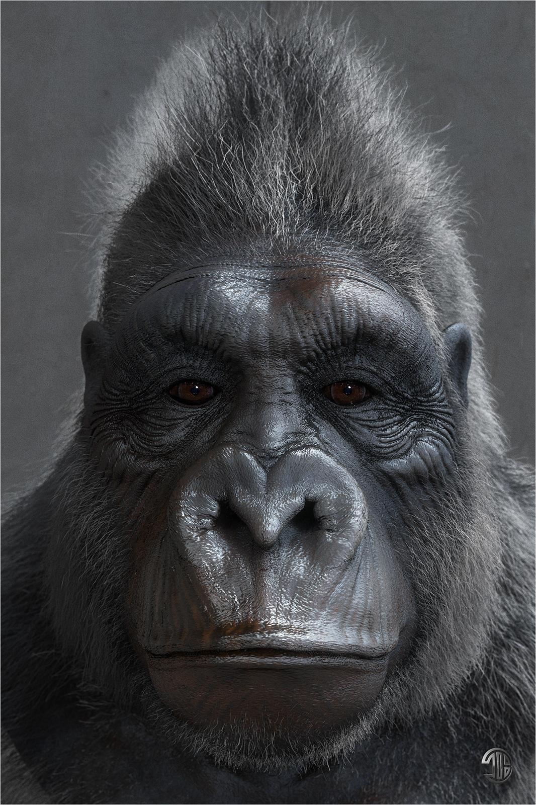 Titiber13 gorilla by titi 02 w 1 0abbb8b7 j30t
