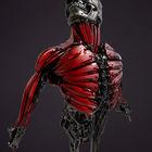 Skull Muscles.