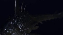 Deep Sea Creature Swim Cycle (Animation)