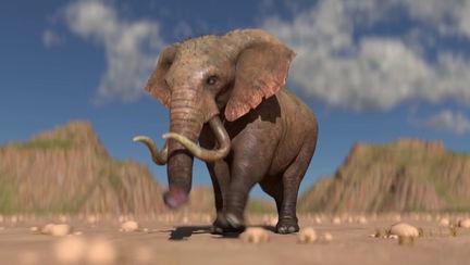 Elephant Run Cycle (Animation)